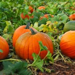 top 5 Pumpkin recipes